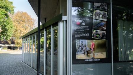 Zoo Praha promítá soukromí zvířat na Samsung QLED 8K